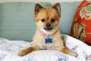 Homecare in Braselton GA: Senior Dog Care Safety
