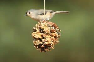 Senior Care in Sugar Hill GA: Bird Watching